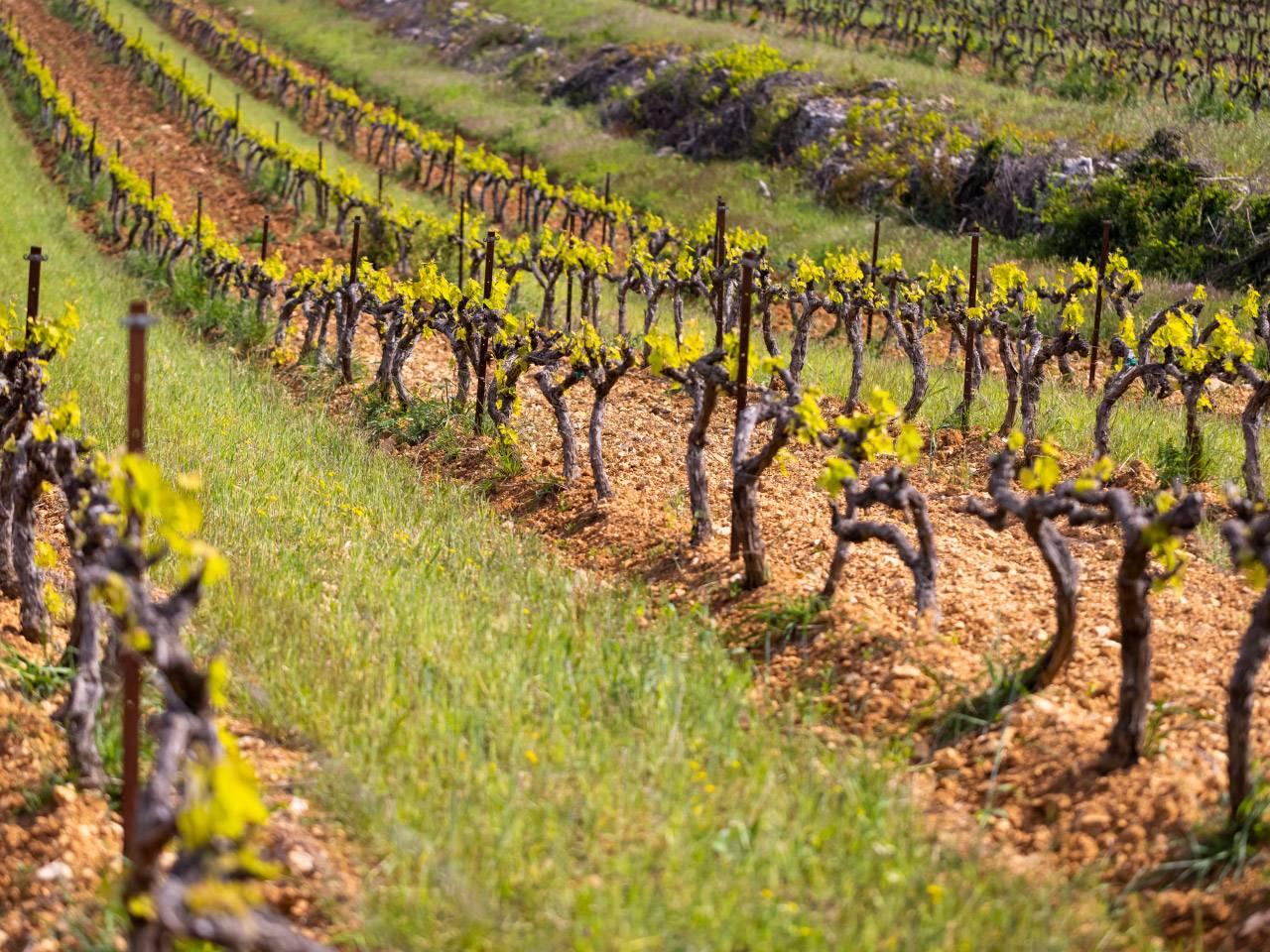 vin terroir provence